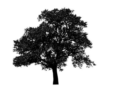 feuille arbre: arbre noir solitaire graphique isol� sur fond blanc