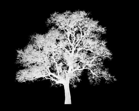 lonely white tree graphic isolated on black background