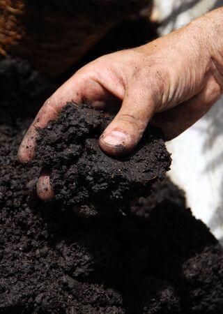 black soil in man hand closeup photo