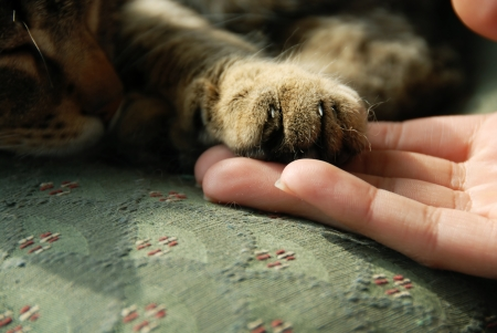 cat paw on human hand details closeup