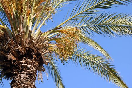 high green palm crown over blue sky photo