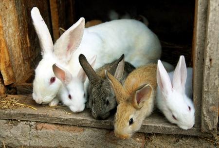 sweet bunny rabbits family Standard-Bild