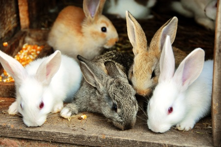 sweet small bunny rabbits family Stock Photo - 9703016