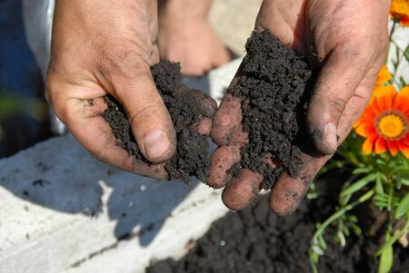 acidity: black soil for planting flowers in man hands closeup