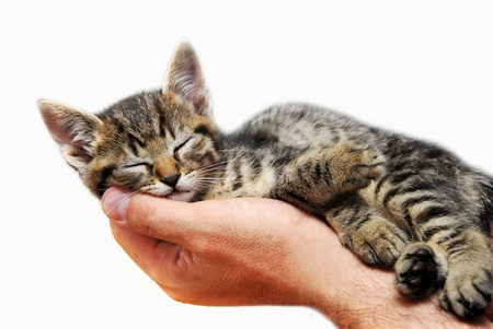 little baby cat sleeping in male arms isolated over white background
