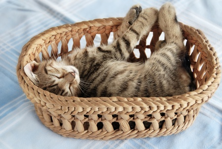 adorable baby cat sleeping in basket over light blue background