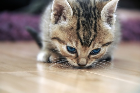 one curious little cat sniffing the floor