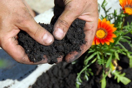planting: black soil for planting flowers in man hands closeup