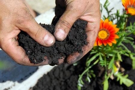 jardinero: suelo negro para plantar flores en primer plano las manos del hombre