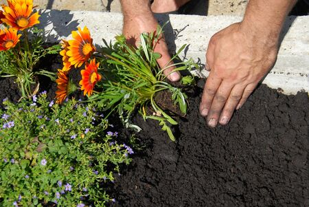 ph: Planting flowers Stock Photo