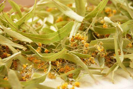 tilo: mont�n de flores secas con cal para el t� de hierbas
