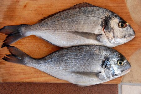 sparus: two gilthead fresh raw fish on kitchen wooden board