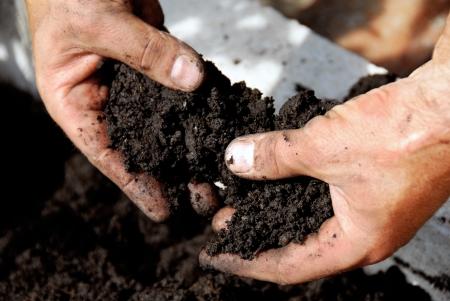 black soil in man hand closeup outdoor