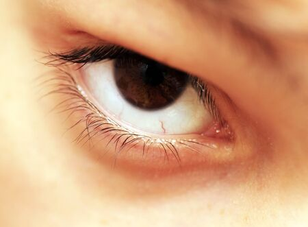 human beautiful brown eye closeup macro photo