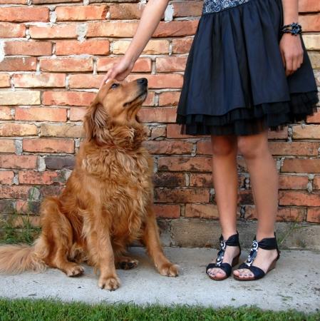 perro golden retriever por las piernas del dueño de niña en vestido negro de pared de ladrillo