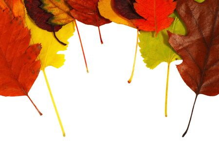 various bright colorful autumn tree leaves over white background photo