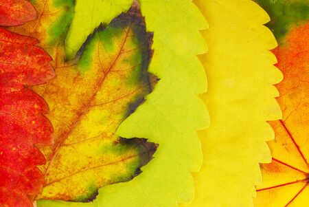 various bright colorful autumn tree leaves background photo