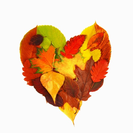 various bright colorful autumn tree leaves in heart shape over white background photo