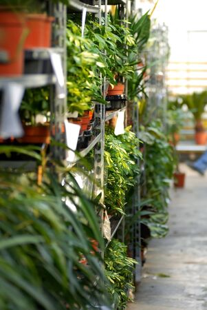 various plants in pots on shelves in garden center photo