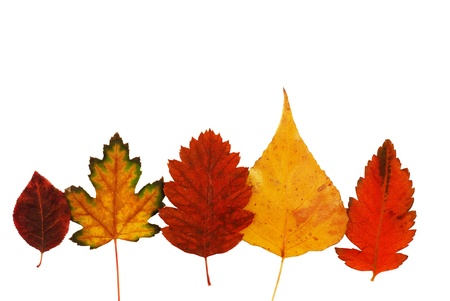 various bright colorful autumn tree leaves row on white background photo