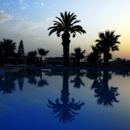 date palm tree: dawn at early morning over peaceful still swimming pool with palm silhouettes in summer resort in Tunisia