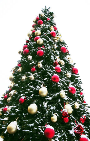 huge christmas tree: huge new year fir tree decorated by christmas balls in snow outdoor over white background