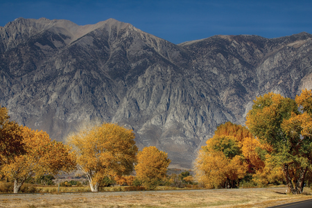 Fall, colorful trees at the foot of the mountains in California