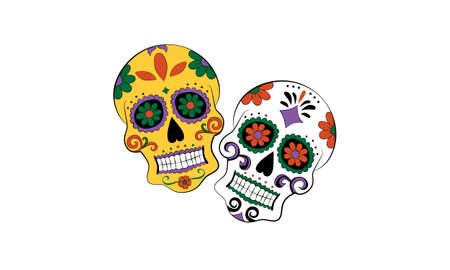 Vector of two day of the dead calaveras or skulls in yellow, orange, green, purple, black and white and isolated against background. Great for traditional and cultural celebrations.