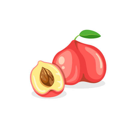 ripe peach and slice. Summer fruit in cartoon flat illustration vector isolated in white background.