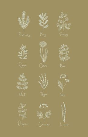 Set of Herbs - 12 Hand Drawn Boho Style Vectors Including Rosemary, Bay, Parsley, Sage, Chives, Basil, Mint, Thyme, Dill, Oregano, Coriander, and Lavender