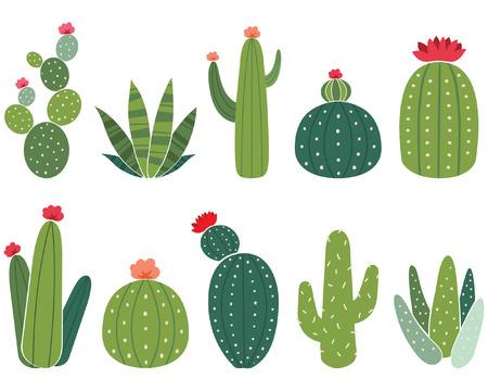 Cactus Elements Set Vector illustration.