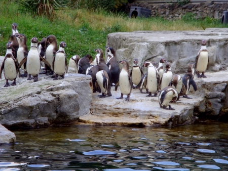 A lot of penguins Stock Photo