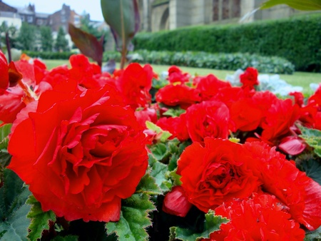 red flowerbed Stock Photo