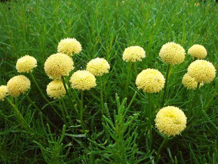 yellow flower on grass