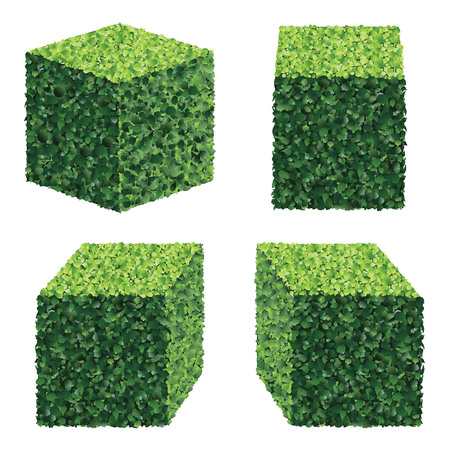 hedge: Perspective Square Bushes. Vector bushes.