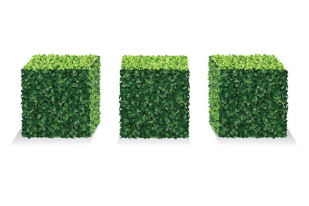 Perspective Square Bushes. Vector bushes.