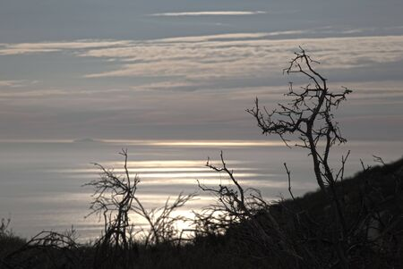 malibu: Silhouette of branches over the silver pacific ocean at sunset in Los Angeles County, Malibu, California. Stock Photo