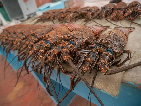 lined up: Orange and blue lobster for sale in a stall at the side of the street in Santa Cruz, Galapagos Islands, Ecuador. Stock Photo