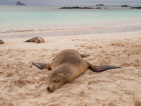 kicker: Sleeping sea lions on beach with green ocean, cloudy sky, yacht and Kicker Rock in the background.