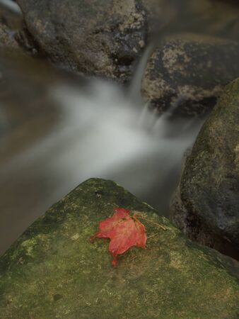 Single red fallen maple leaf on a green rock by a stream of water.
