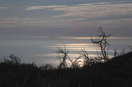 los angeles county: Silhouette of branches over the silver pacific ocean at sunset in Los Angeles County, Malibu, California. Stock Photo
