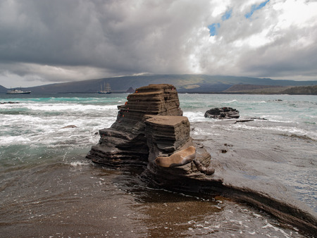 tiered: Sea lion lounging on three tiered rock formation on the beach with sea and ships and cloudy sky in the background in Galapagos Islands, Ecuador. Stock Photo