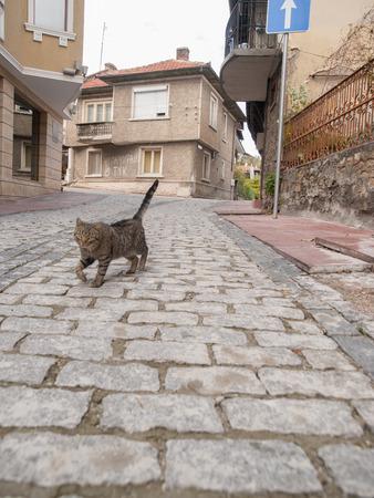 veliko: Cat walking down cobblestone road in Veliko Turnovo Bulgaria, Europe. Stock Photo