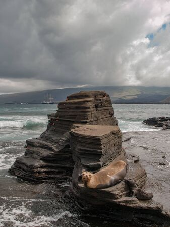 lounging: Sea lion lounging on three tiered rock formation on the beach with sea and ships and cloudy sky in the background in Galapagos Islands, Ecuador. Stock Photo