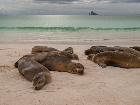 lions rock: Sleeping sea lions on beach with green ocean, cloudy sky and Kicker Rock in the background. Stock Photo
