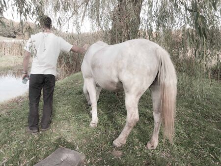 astra: White horse feeding on grass while caucasian male pets it by the water at Astra Outdoor traditional museum, Sibiu, Romania, Europe. Stock Photo