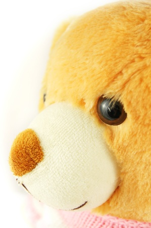 Teddy bear isolated on white photo