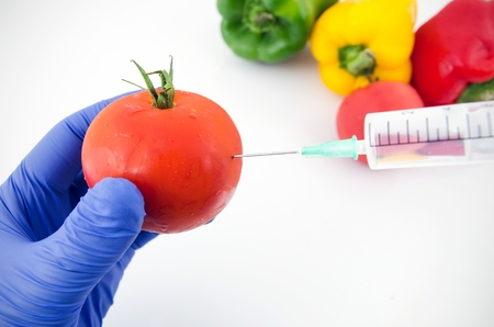 Man with gloves working with tomato in genetic engineering laboratory. GMO food concept. photo