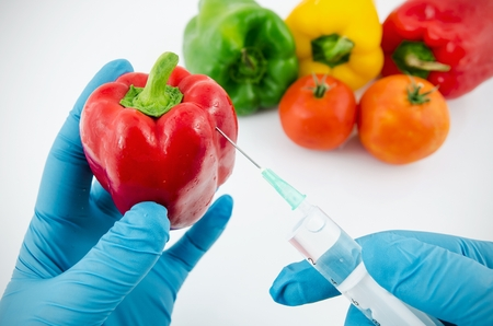 Man with gloves working with pepper in genetic engineering laboratory. GMO food concept. photo