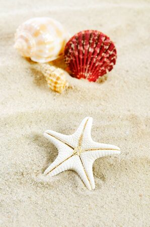 Few shells on the golden beach. Holiday or vacation composition close up Stock Photo